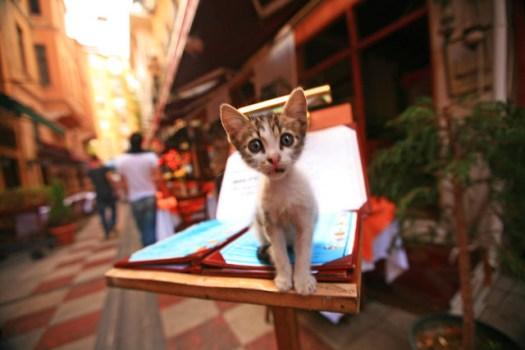 Cat on the Menu
