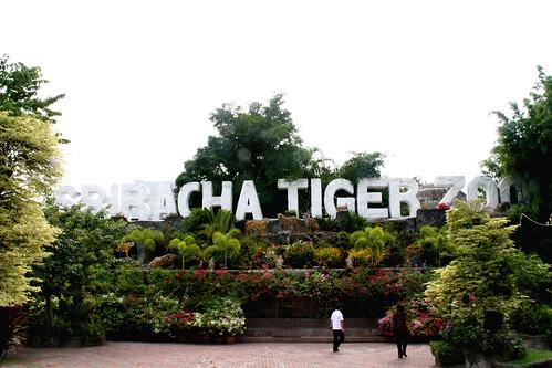 tiger zoo!
