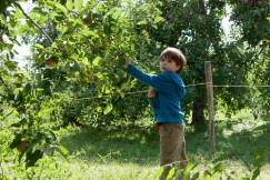 Colin picking apples