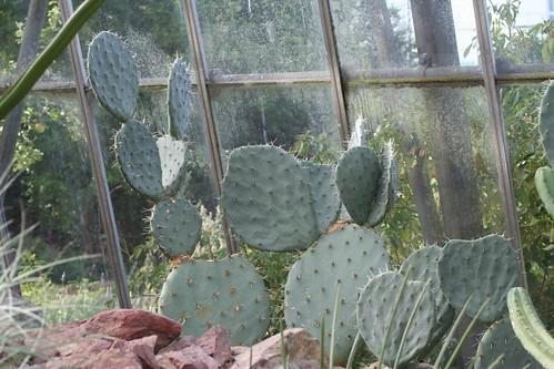 20090919 Edinburgh 20 Royal Botanic Garden 315