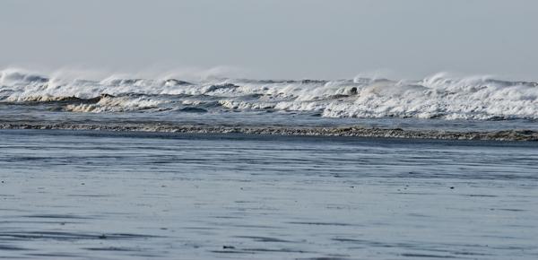 Shorebirds near Pacific Beach