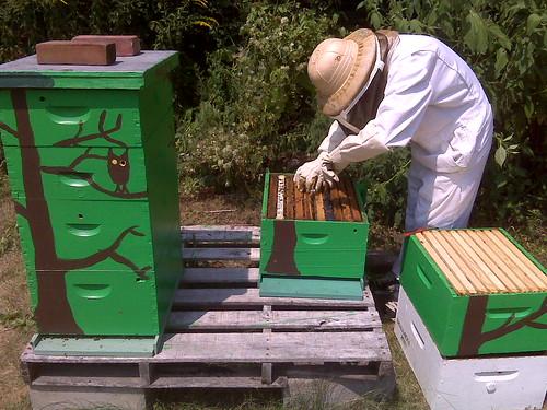 Re-queening the hive