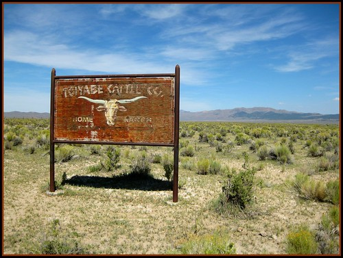 Toiyabe Cattle Co.