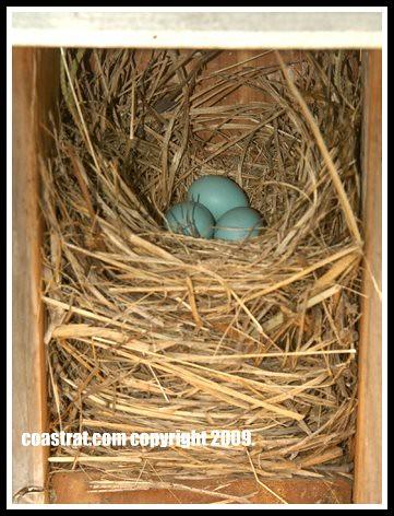 DSC_0078ABC-Box#12Eggs-Large Nest