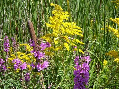 Summer bloom at Springbrook's bus stop