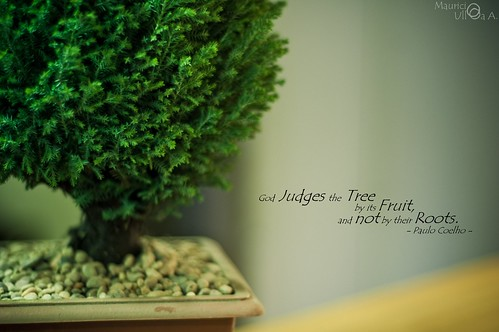 God Judges the Tree by its Fruit, and not by their Roots.