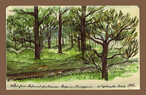 Color Sketch Baguio Trees