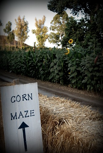 Corn Maze Sign by you.