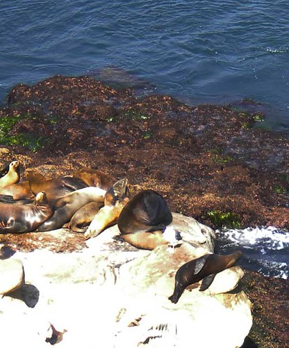 seals chill in my block!
