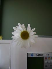Daisy Before