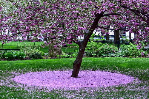 NYC Spring Color by hz536n