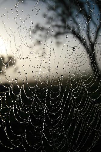 Shattuck_C28620, Spider webs, near Bungendore, NSW