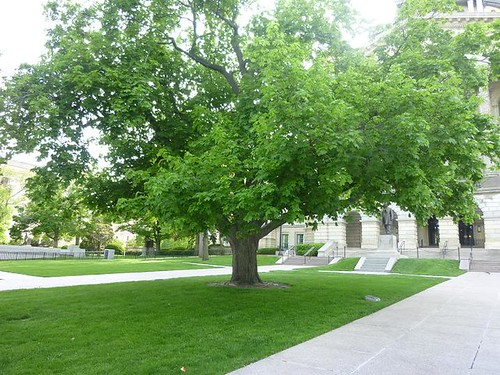 IL - Springfield 129 Memorial tree