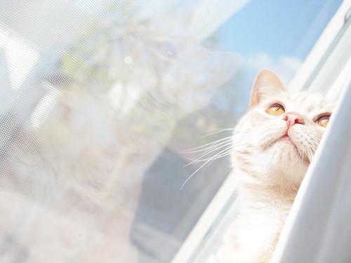 nina in the window