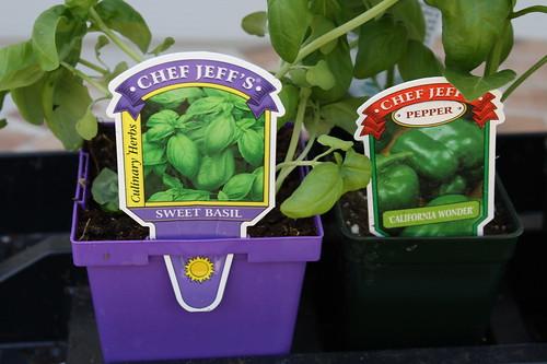 Basil and Green Pepper