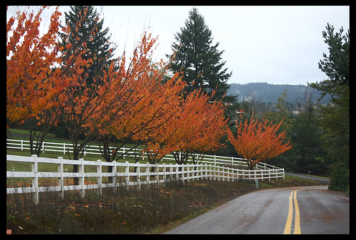 On our roadtrip this weekend to wine country/Willamette Valley Oregon