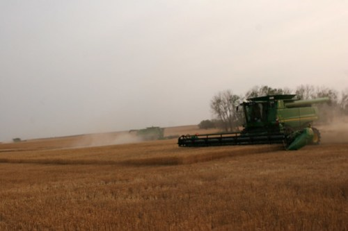 Cutting a field in Hazelton