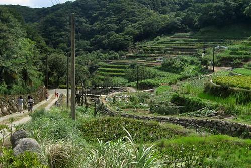 Bamboo lake