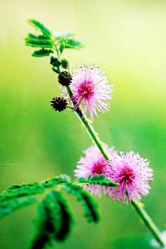 tho hoa trinh nu