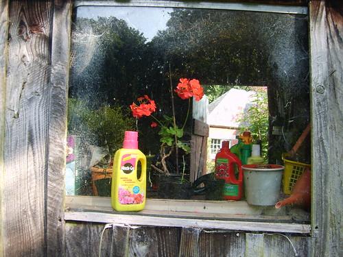 in-the-window