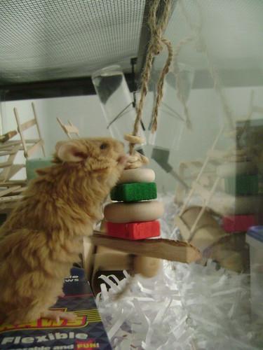 Ripley likes cheerios