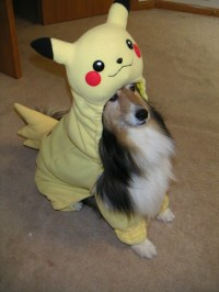 Everything Pokemon: Pikachu Dog Costume