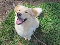 Theodore on grass