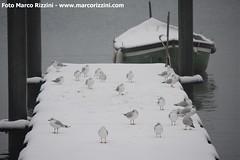 Neve sul lungolago di Desenzano del Garda