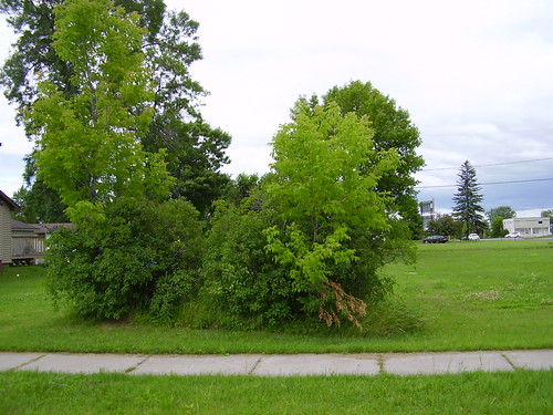 The lot where the Nadolski family home used to be.
