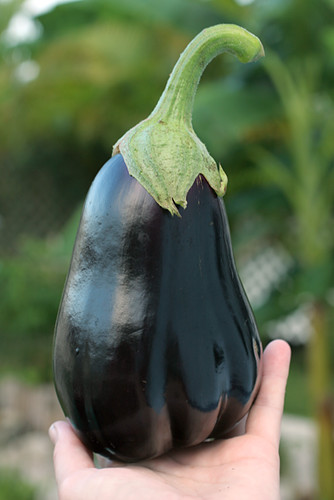 First-Eggplant