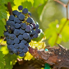 St. Supéry Vineyards and Winery - Rutherford, ...