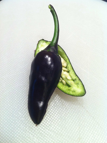 Black Hungarian chilli