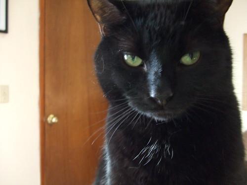 Zoe is unimpressed.