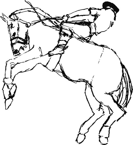 Rodeo horse sketch
