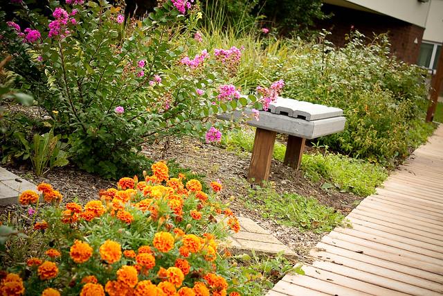 garden (1 of 1)