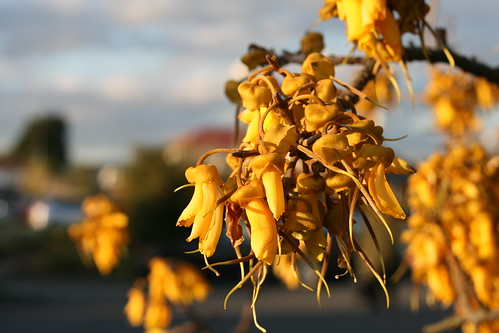 Thursday: Golden flowers at Golden Hour