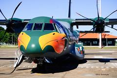 C-295+1