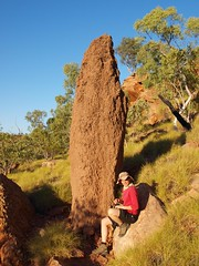 Ella gets attacked by termite mound whilst posing for photo