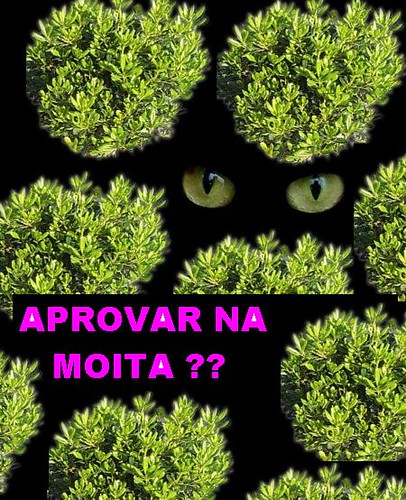 aprovarnaMOITA