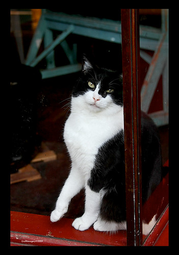 How much is that kitty in the window? by you.