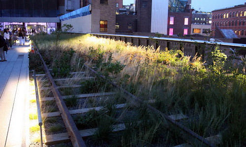 The wild grasses in High Line Park