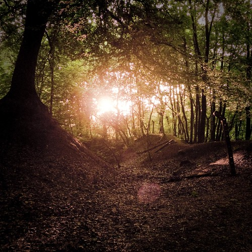 End of Day in the Enchanted Forest - Photo : Gilderic
