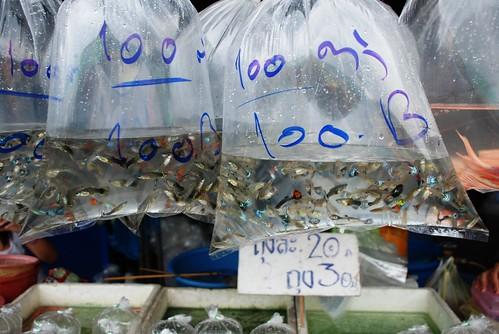 100 Guppys = 100 Baht = 2 Euro