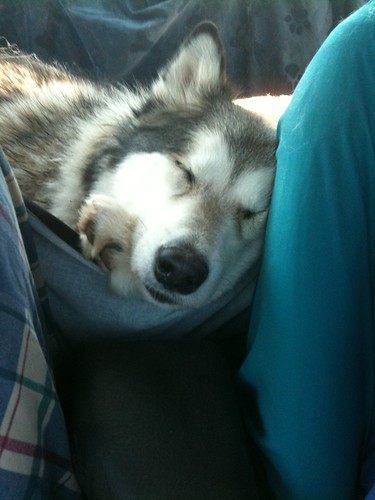 Sleeping on the way home