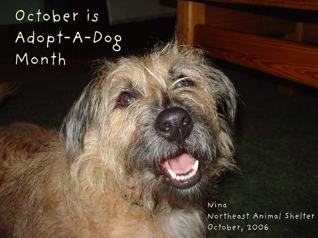 October is Adopt-A-Dog Month