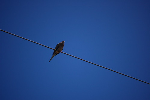 189: Dove on a wire