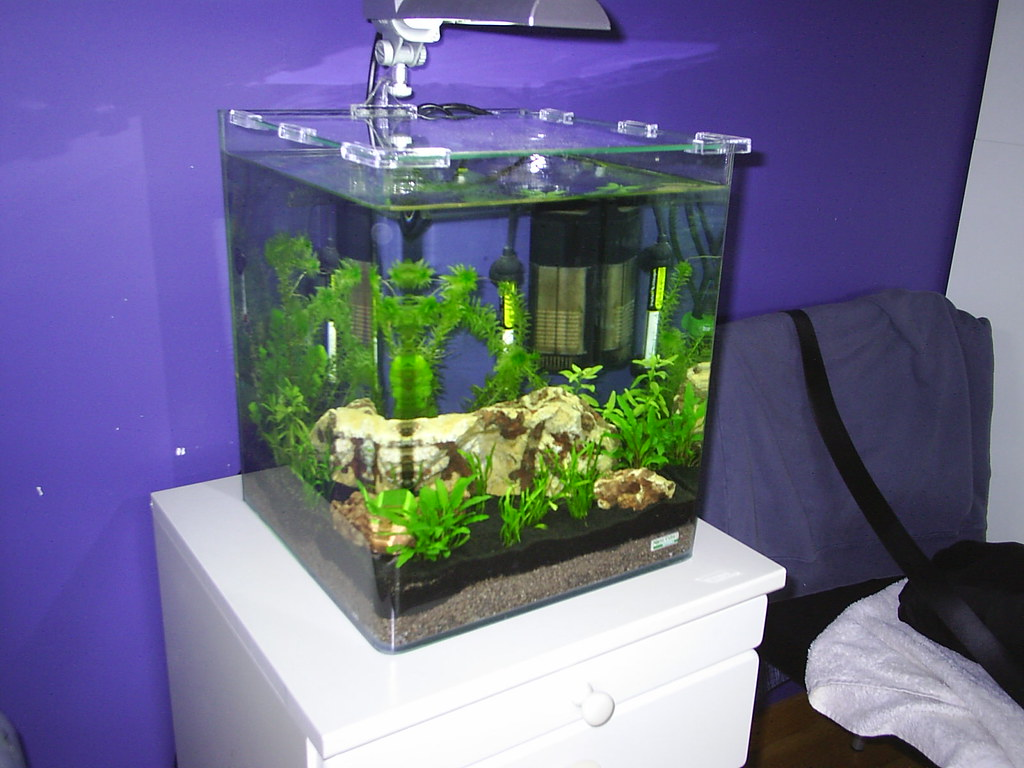 First tank: Dennerle Nano Cube 30l - New to Planted Aquariums - Aquatic Plant Central