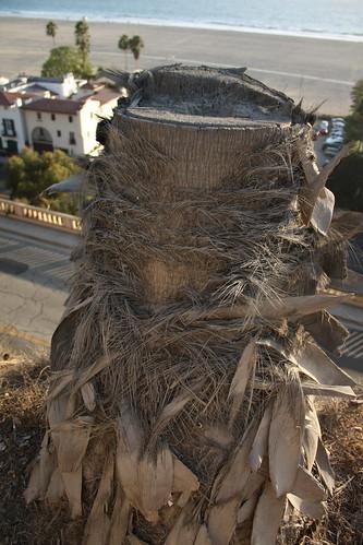 chopped down palm tree