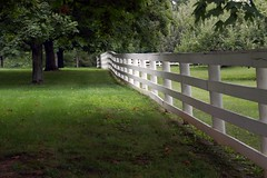 Orchard Fence Row