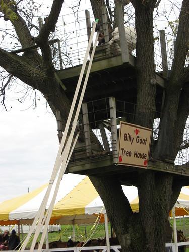 Goat tree house